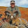 Hawaii Mouflon Sheep