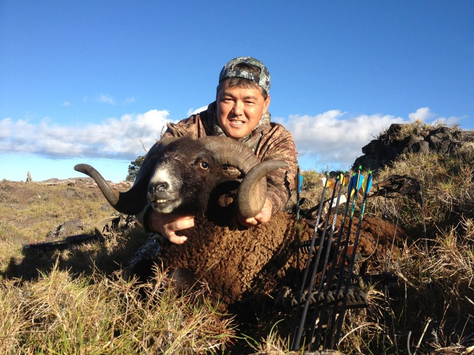 bowhunting Hawaiian black sheep